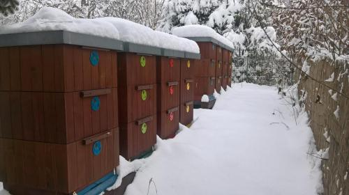 Včelnice Sedlnice v zimě