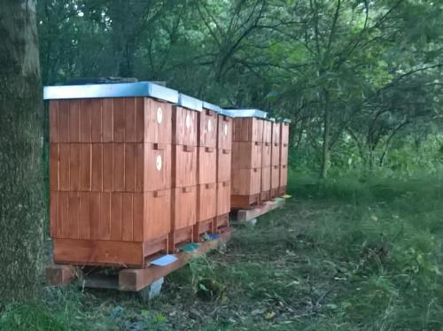 Včelnice v lese