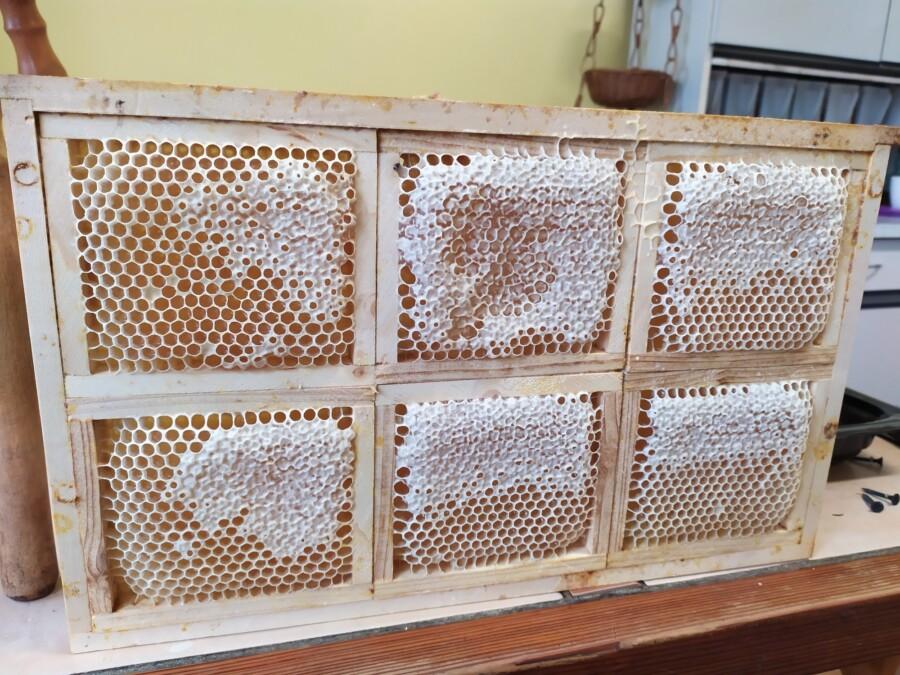 Plástečkový med