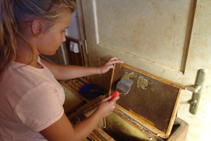 Anička Klinkovská odvíčkovává plástev medu pro prodej v Ostravě